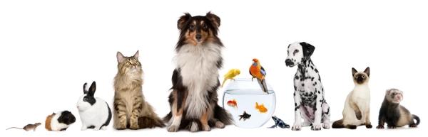 Relativ Nos animaux de compagnie - Discussions Générales - GTA Network  YV73